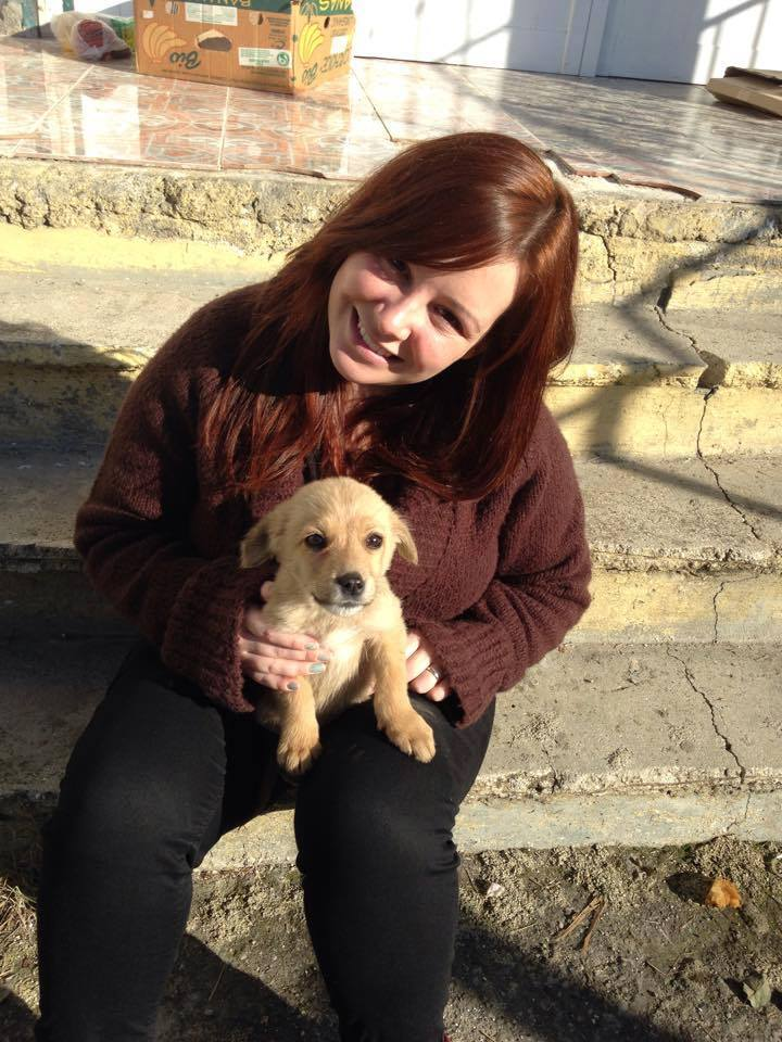 Finding a Home for a Street Puppy